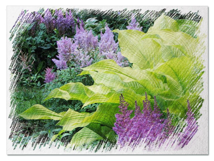 Companion plants for hostas pictures