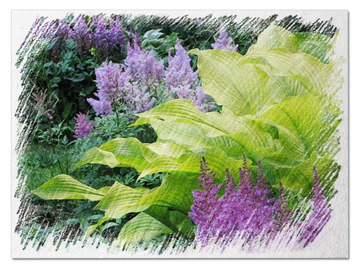 Companion plants for hostas pictures
