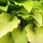 Academy Beech Leaf Stack