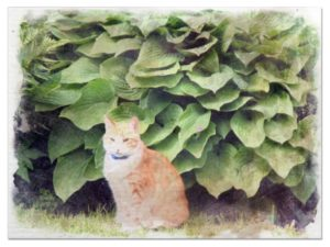 Are Hostas Poisonous To Cats